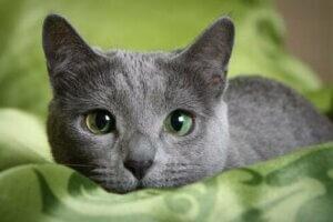 Kedinizin Veteriner Ziyaretlerini Daha Az Stresli Hale Getirin