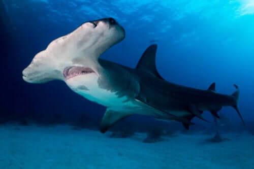 Nesli Tükenme Tehlikesi Altındaki 300'den Fazla Köpek Balığı ve Vatoz Türü
