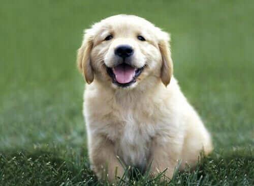 Köpeğinizin Daha İyi Kokmasını Sağlamanın 4 Basit Yolu