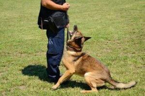 En iyi köpek eğitmeni nasıl seçilir