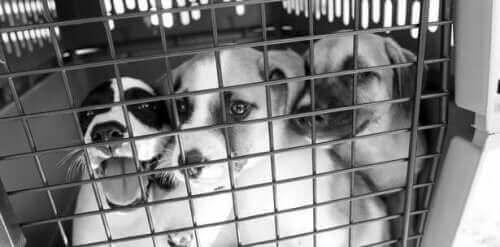 Evsiz Köpekler İçin Yaşam Umudu