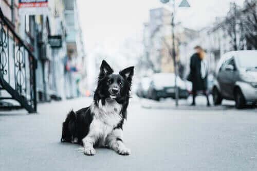 Hayvan İstismarıyla Mücadele: Nasıl Destek Olunur?