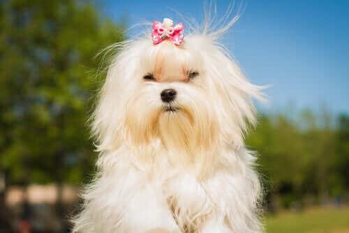 Ünlüler Arasındaki En Popüler Köpek Irkları Hangileridir?