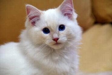 Kediler Sahipleri İle Olmayı Sever