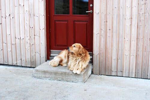 Köpekler yatılı geziden döndüklerinde