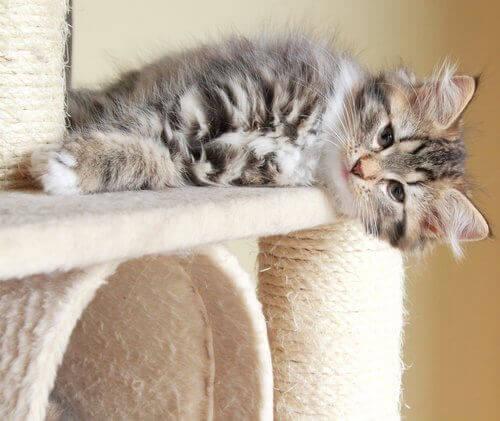 Tırmanma tahtasında yan yatan kedi