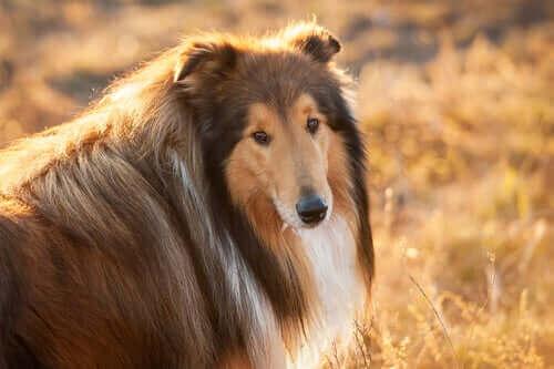 Köpeklerde Diyabeti Önlemek - Alışkanlıkları Değiştirmek