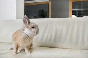 beyaz koltukta duran küçük tavşan