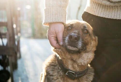 Köpeğini seven bir kişi.