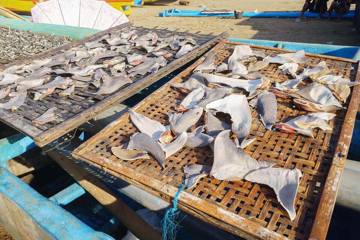 satılan köpek balığı yüzgeçleri