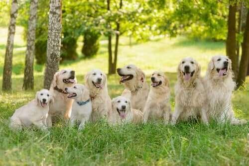 Köpek Burçları: İkinci Altılı
