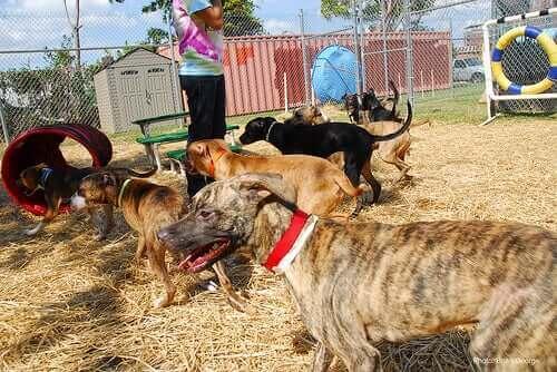 Köpeklere İtaat Eğitimi: Doğru Eğitim Tarzı Nasıl Seçilir?