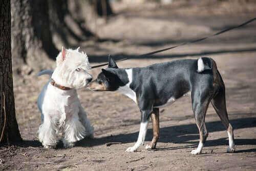 Başka bir köpeği koklayan bir köpek.