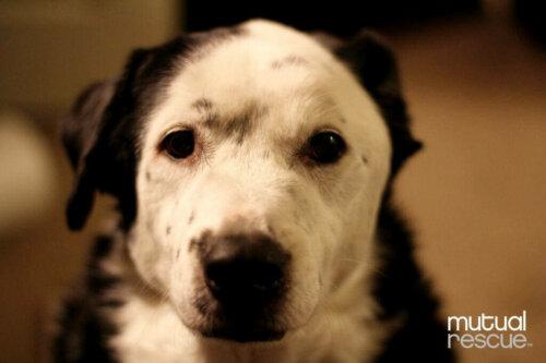 Bir Köpek Nasıl Obez Sahibinin Hayatını Kurtardı
