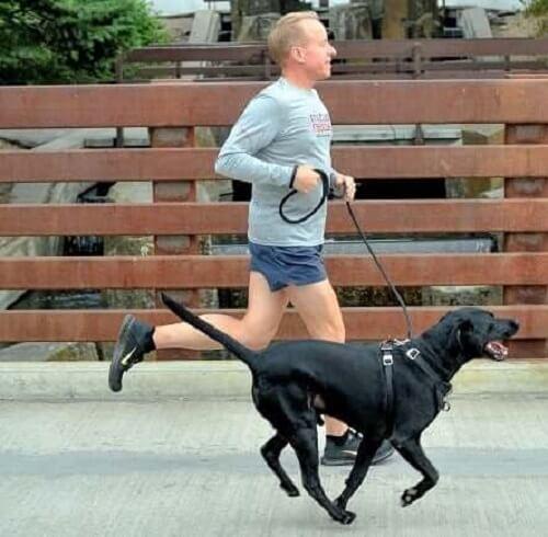 Sahibi ile birlikte koşan bir köpek.
