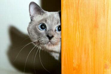 Kedilerde Taşınma Travması: Süreci Nasıl Yönetebilirsiniz?