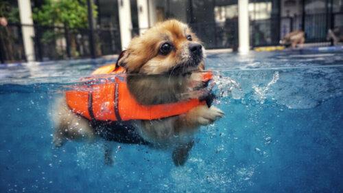Köpeğinizle Yüzmek İstiyorsanız Bilmeniz Gereken 5 Şey