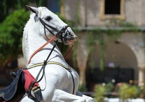 Bir avluda şaha kalkmış beyaz at