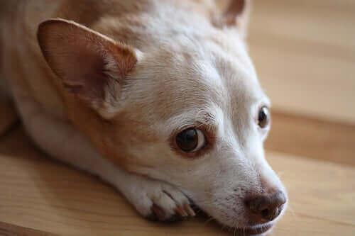 Köpeklere Alerji Testi Yapılması Mümkün Müdür?