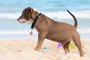 kumsalda duran tasmalı köpek