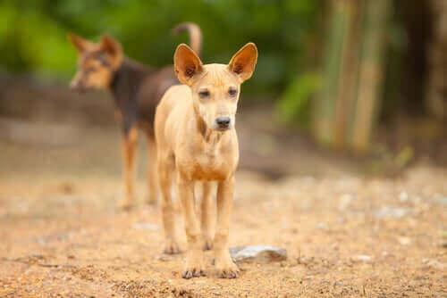 İki sokak köpeği.