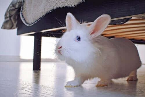 Evcil Hayvan Olarak Tavşan Bakmak: Bilmeniz Gereken Her Şey
