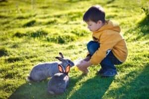 çimlerde tavşanla oynayan çocuk