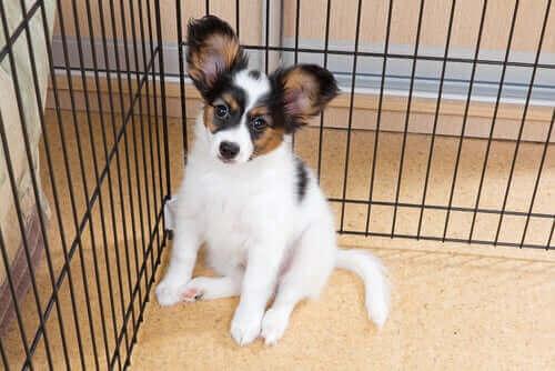 Barınakta kalan büyük kulaklı yavru köpek