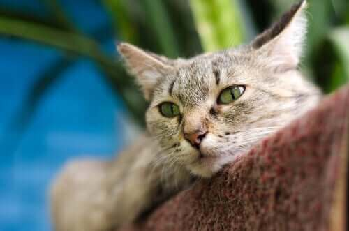 Mırlamak: Kedilerin Mırlayarak Kendilerini Nasıl İyileştirdiğini Öğrenin