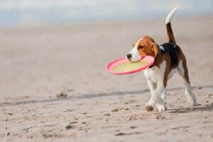 Yaz Aylarında Köpeğinizle Oynayabileceğiniz Oyun Önerileri