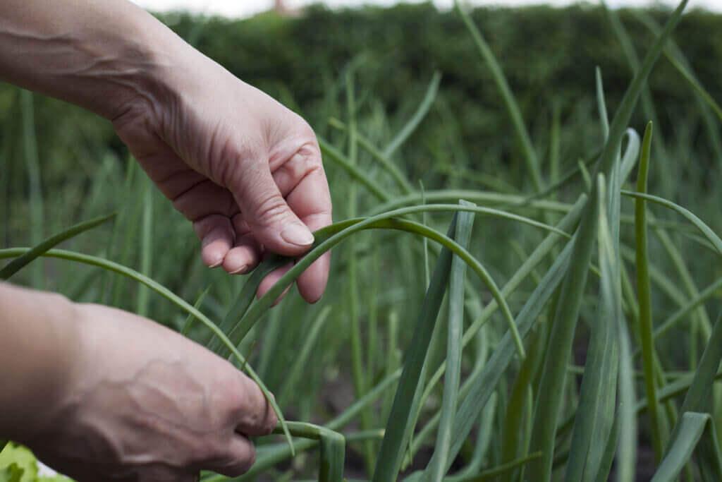 Agroekolojik Tarım Nedir?