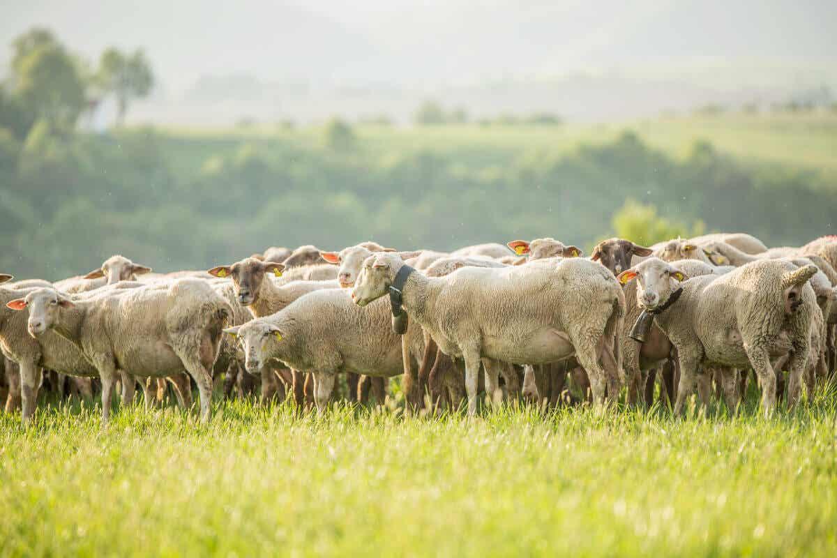agroekolojik tarım hayvancılık