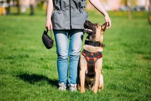 Eğitimli Köpekler ve Ara Bulucu Köpekler