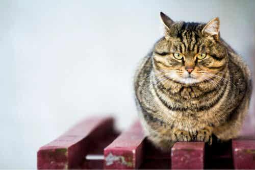 bankta oturan sinirli kedi