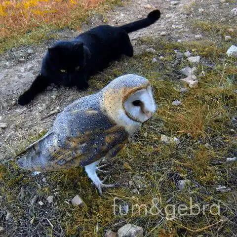 baykuş ve kedi dostluğu