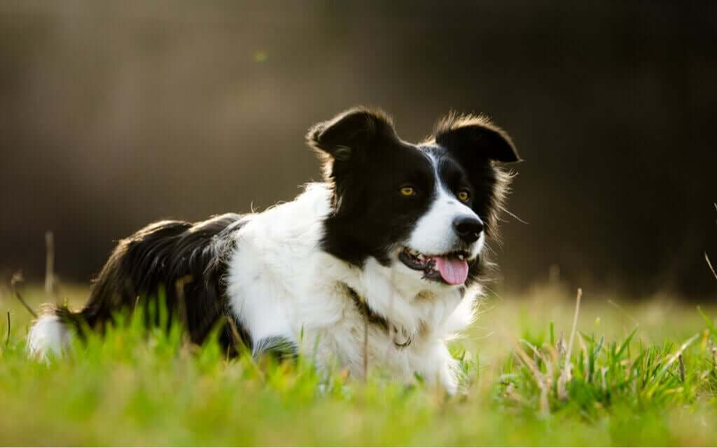 Sahibinden 5 Milyon Dolar Miras Alarak Milyoner Olan Köpek