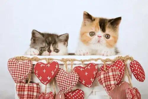 kutuda birlikte duran kediler