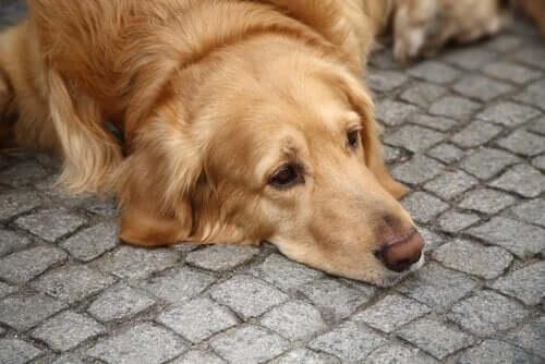 kaldırımda yatmış mutsuz köpek depresyon