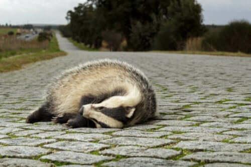 Ekolojik Tuzaklar: Neden Hayvanlar İçin Bir Sorun?