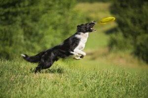 yaz ayında oyun oyanayn köpek