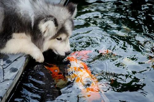 Hayvan Türleri Arasındaki Dostluklar