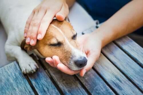 Köpeklerde Soğuk Algınlığı Tedavisi İçin Bu Sekiz İpucuna Göz Atın