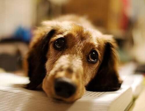 boğulmuktan kurtulmuş köpek