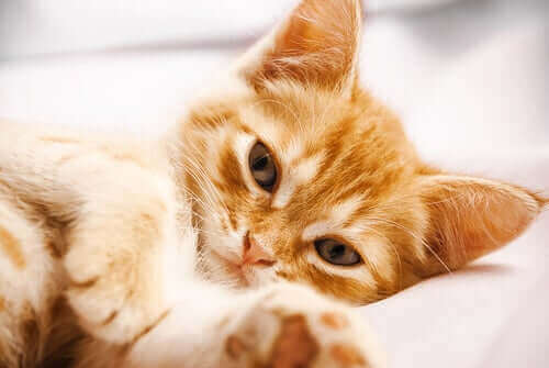 yatmış, patilerini oynatan huzurlu kedi