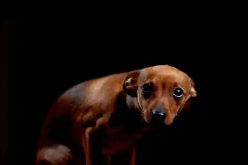 karanlıkta korkmuş küçük köpek