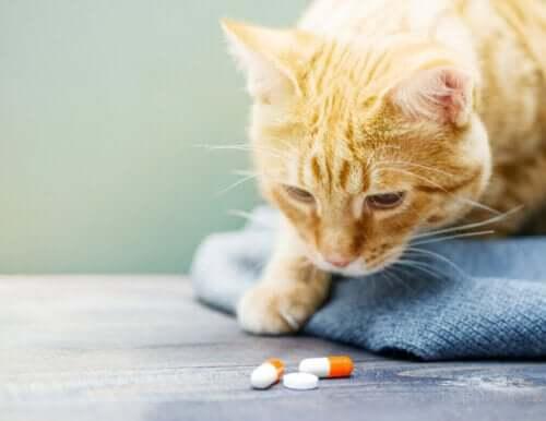 Kedilere Nasıl İlaç Verilir?