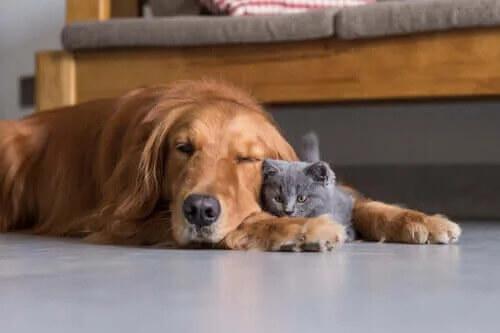Kedilerde ve Köpeklerde İşitme: Altıncı Bir His