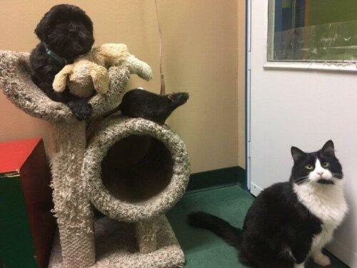 Türler Arası Dostluk: Bir Kedi, Bir Köpek ve Bir Sıçan