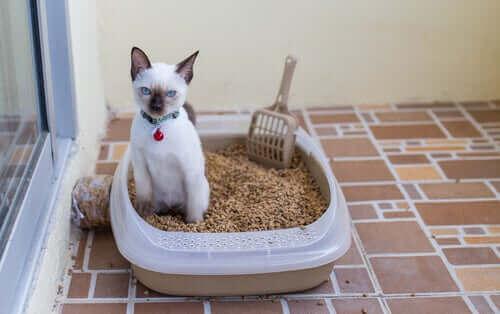 Kedilerde İdrar Yolu Enfeksiyonları Nasıl Anlaşılır?