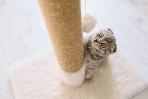 Kedi Tırmalama Tahtaları Hakkındaki Her Şey